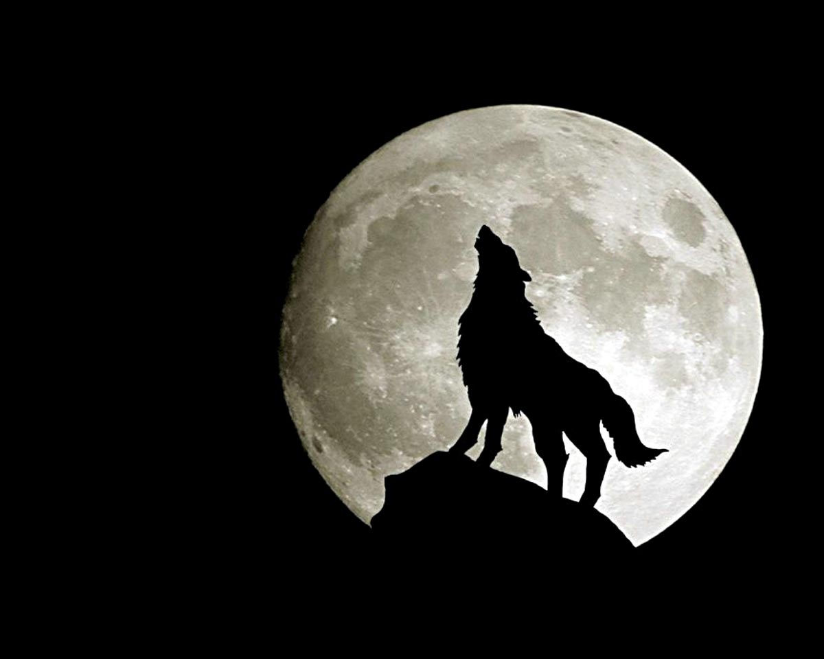 Wolf Pictures Cool Images Of Wolves